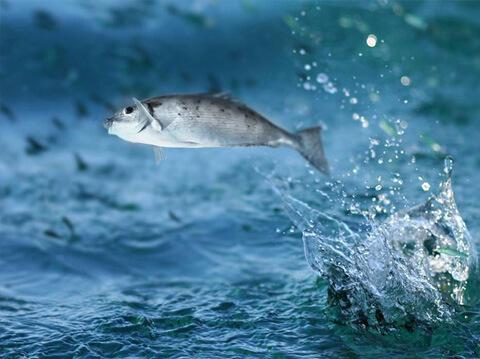 Ein Fisch, der aus dem Wasser springt